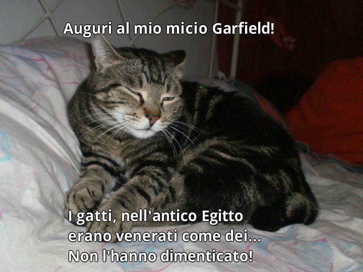 Frasi Sui Gatti Divertenti Il59 Pineglen